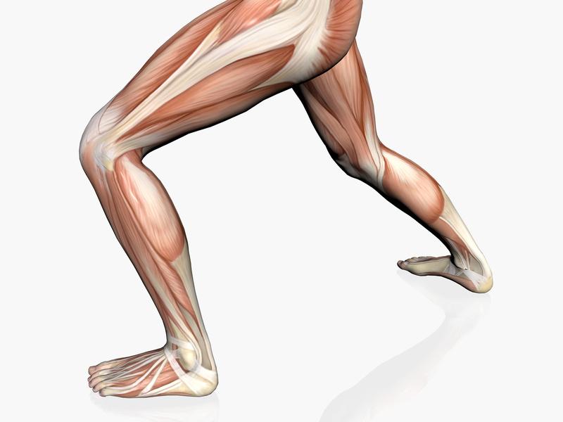 Rotura de Fibras Musculares o Desgarro Muscular
